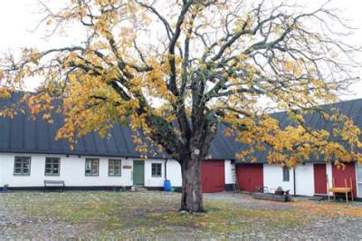 Innergården till Kvarndala gård. Numera utan det vackra trädet som blivit en fara genom sin bräcklighet.
