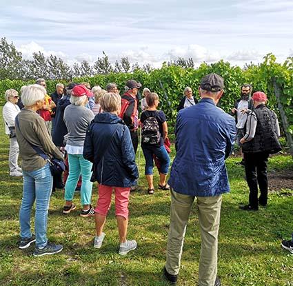 31 deltagare från Museiföreningen fick en lektion om odling och druvor bland annat.